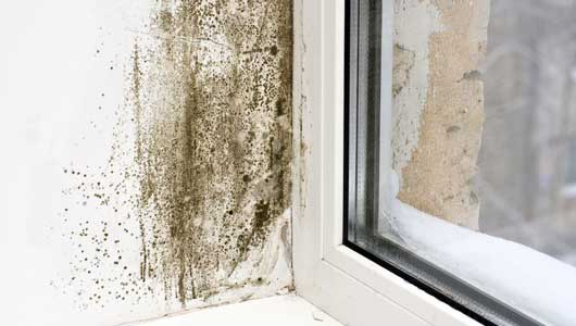 Get Rid Of The Dampness With Professional Help