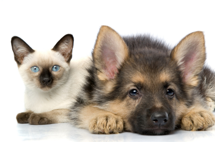 Pet Insurance for Dogs and Cats Makes Caring for Older Pets Less Stressful