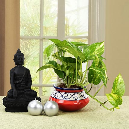 serene-buddha-and-plant_1