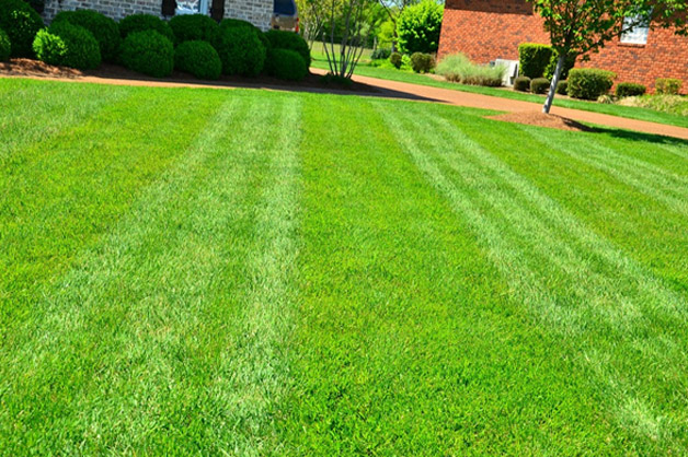 Best Lawn Aeration Guideline