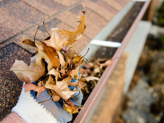 Gutter Maintenance Tips For Fall