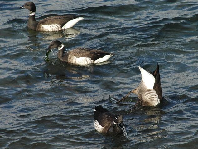 Efficient Way To Hunt Ducks