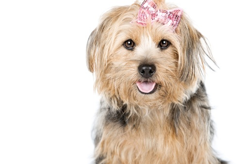 Female Dog Names Are Special And Should Be Great Ones For The Dog Is Special