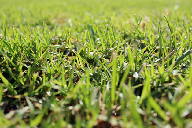 The Best Lawn Aeration Guideline For You