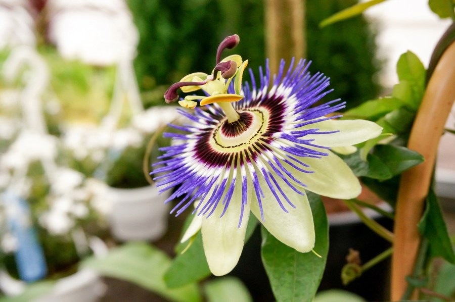 10 Most Beautiful Flowers That Will Totally Take Your Breath Away